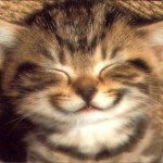 chat-cat-kat-smile-sourire
